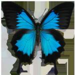 青い蝶.png